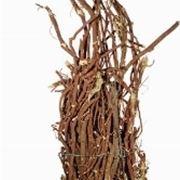 radice di liquirizia