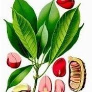 cola pianta